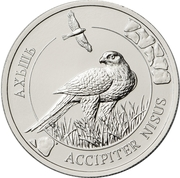 2 Apsars (Eurasian sparrowhawk) – reverse