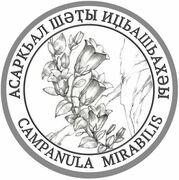 2 Apsars (Campanula mirabilis) – reverse