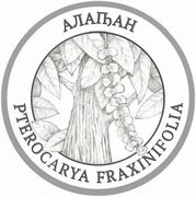 2 Apsars (Pterocarya fraxinifolia) – reverse