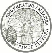 2 Apsars (Pinus pityusa) – reverse