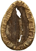 Cowrie (Gold-plated bronze imitation) – reverse
