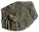 AE unit - Sivamagha I  (Maghas of Kausambi) – obverse