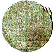 1 Pitis (Jambi Sultanate) – reverse
