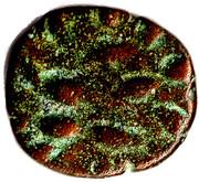 Drachm - Kamnaskires / Orodes - Kingdom of Elymais (Arsacid Dynasty) -  reverse