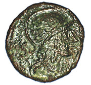 Némausus - Nimes - Bronze NEM COL – obverse