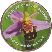 1 Shilling (Laughing Bumblebee Orchid) – reverse